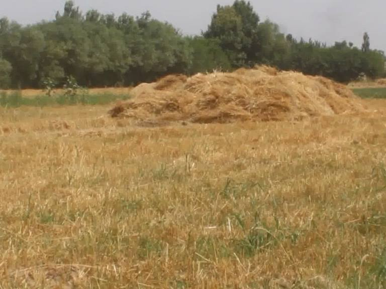 Taliban in Baghlan are collecting thousands of kilograms of wheat as religious taxes
